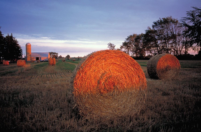 Balles de foin sur une exploitation agricole près de Stratford. Photographie : © Tourisme Ontario.