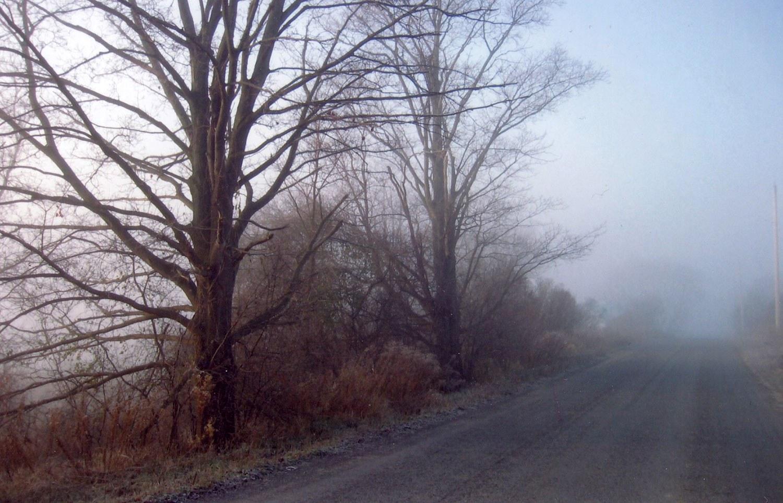 Nombre de routes de campagne ontariennes présentent encore les indices des plantations d'arbres commencées à la fin du XIXe siècle. Remplacer ces arbres anciens par de nouveaux garantira le maintien du caractère spécifique de ce réseau rural.